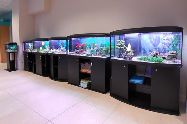 Aquarium 2000 acquari e pesci tropicali castel mella for Acquario 100 litri prezzo