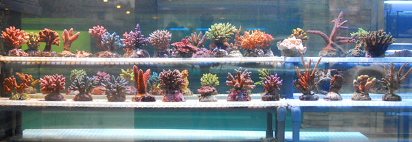 Aquarium 2000 acquari e pesci tropicali castel mella for Vendita on line pesci tropicali