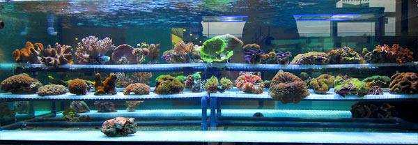 Aquarium 2000 acquari e pesci tropicali castel mella for Acquario vendita